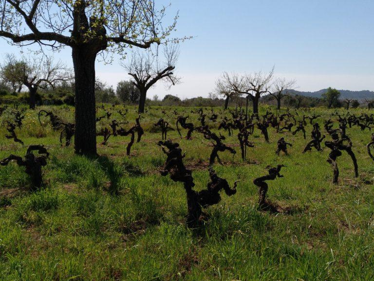 viña que produce el vino tinto Sotil